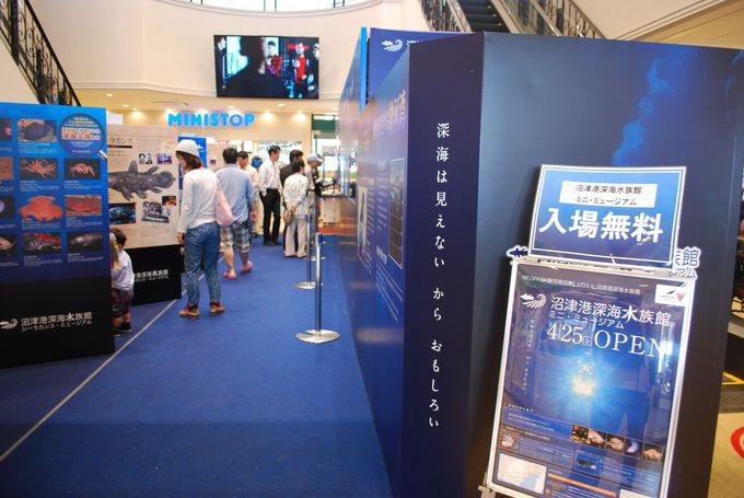 正面入り口には『深海魚』を展示。