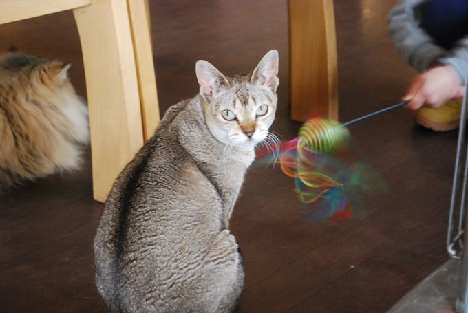 猫のお家にいらっしゃいなのニャー