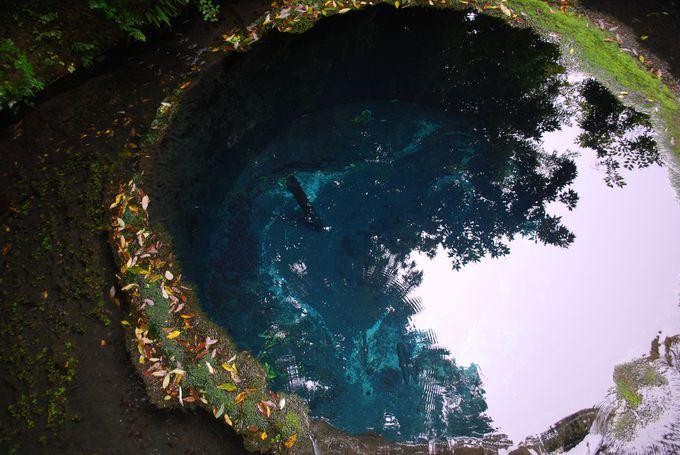 第二展望台から見えるのはエメラルドブルーの湧水