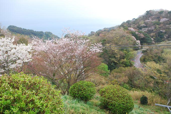 日本観光地百選で1位に選ばれたこともある名勝「日本平」