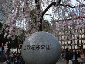 1200本の桜がスゴイ!お花見&グルメなら上野恩賜公園!