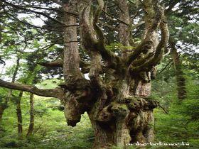日本海の秘境・隠岐の島の絶景&パワースポット巡りの旅