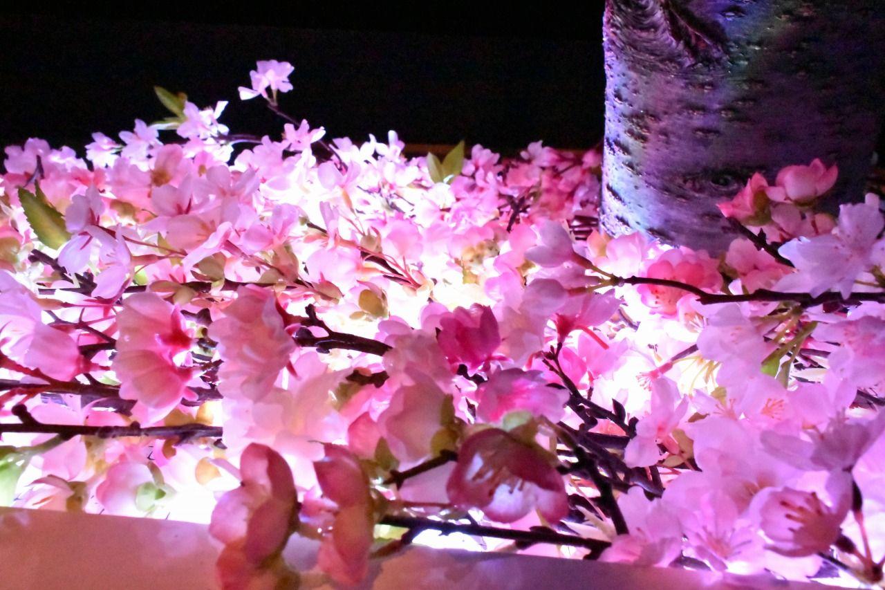 日本一早いお花見を司る桜のインスタレーション「桜彩(おうさい)」