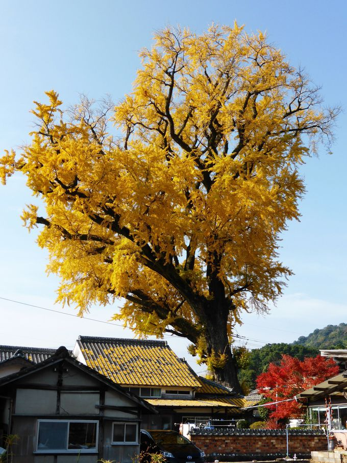有田でしか見られない紅葉の見どころはここ!