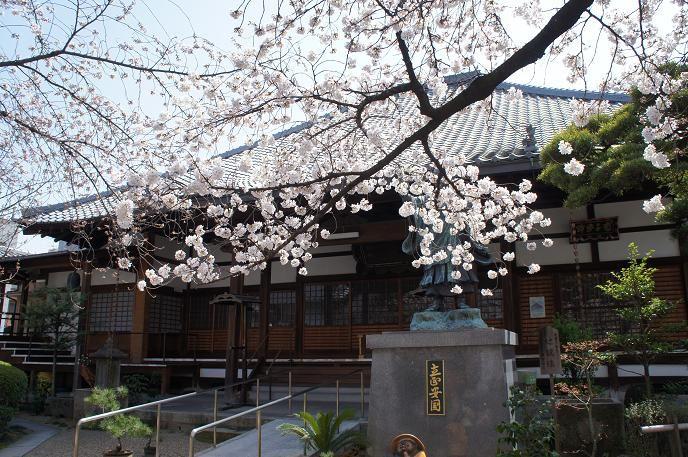 墨染寺も桜の名所♪