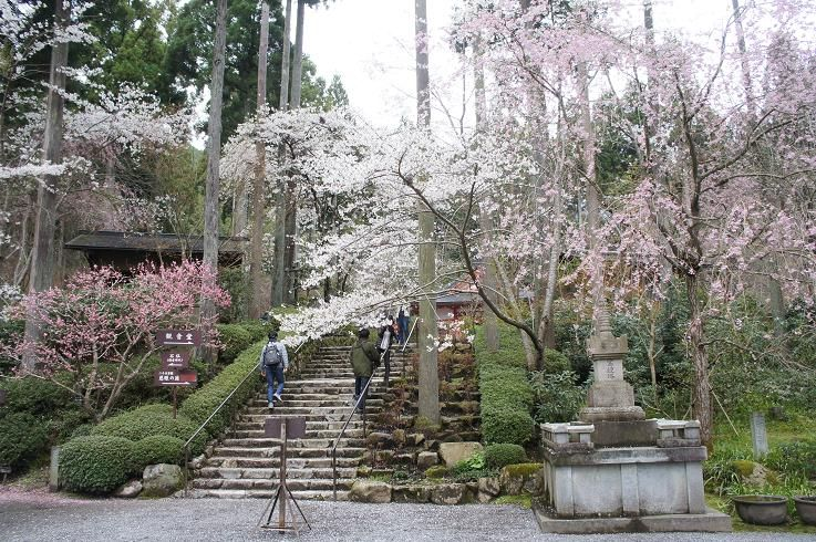 春こそ訪れたい!京都・大原は桜から期間限定のカフェまで魅力満載