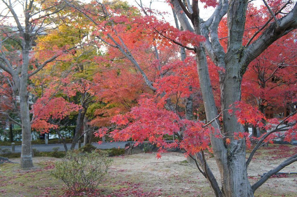 無料で紅葉を見ることができます!智積院