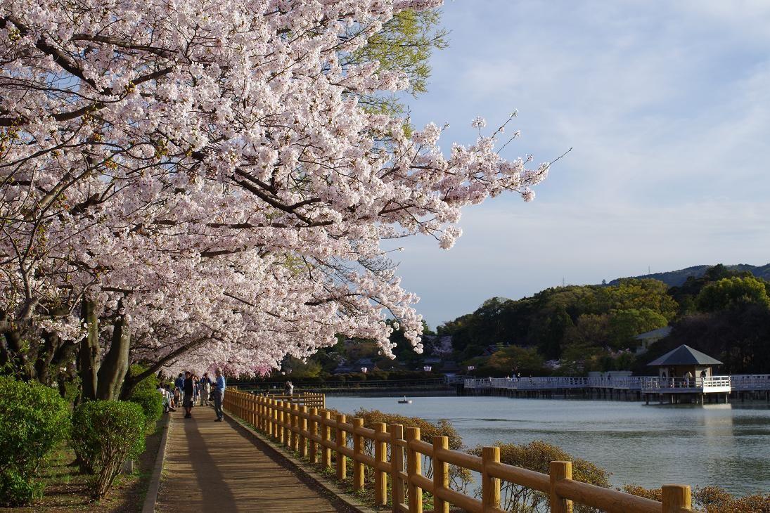 ここならゆっくり桜を観賞できる!京都の穴場な桜名所3選