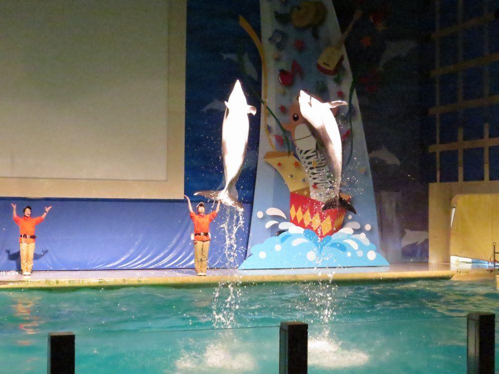 本州最北端の浅虫水族館で圧巻の海底トンネル!海獣館やイルカショーも楽しもう!