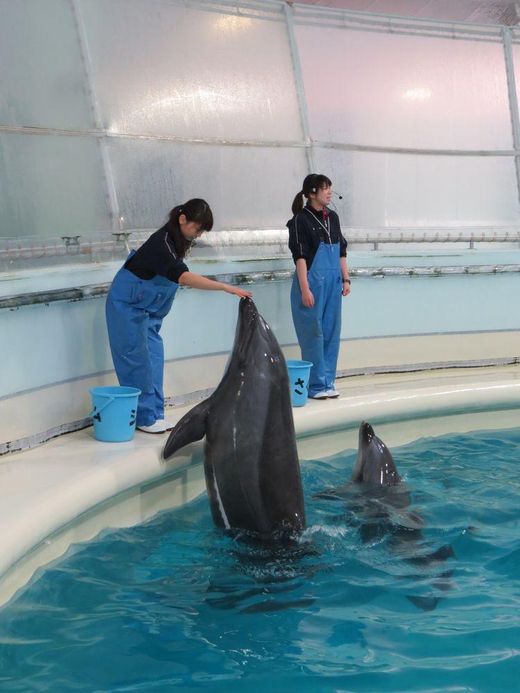 イルカ館でイルカの餌付け