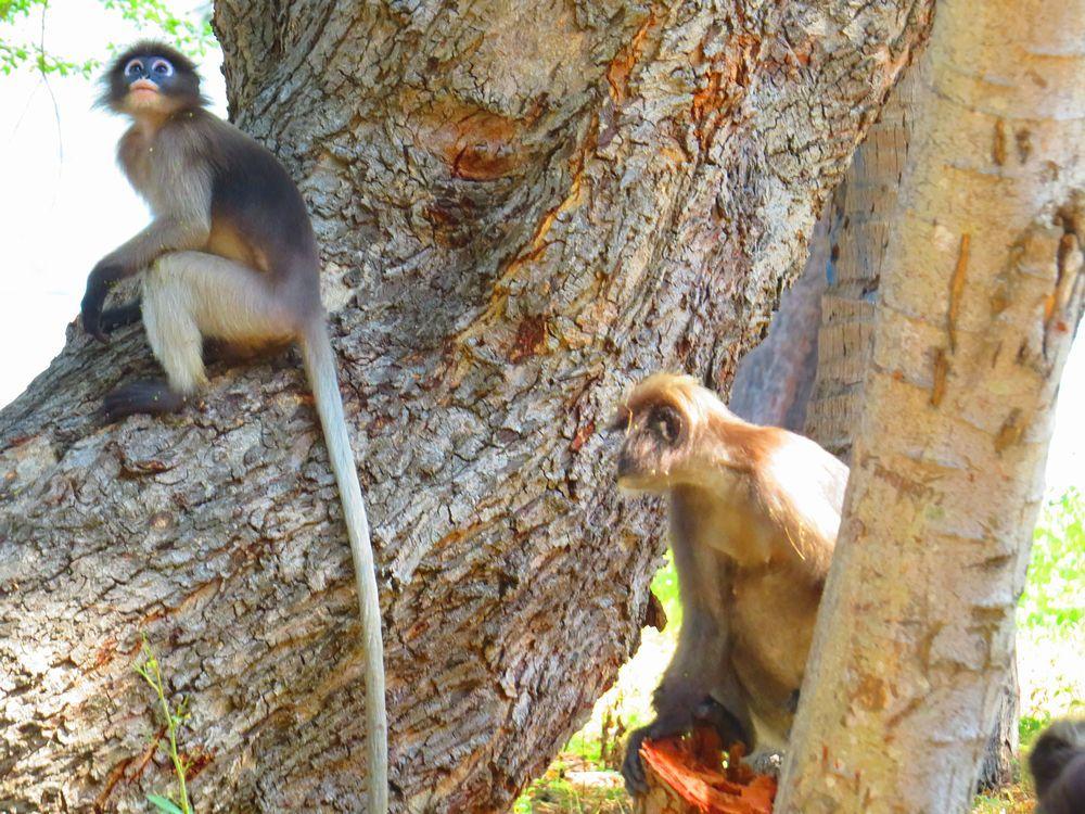 砂浜の散策と野生のかわいい猿たち