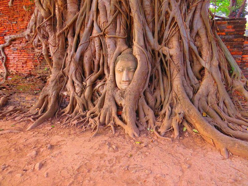 アユタヤのワット・マハタートで木の根元にある奇跡の仏頭!