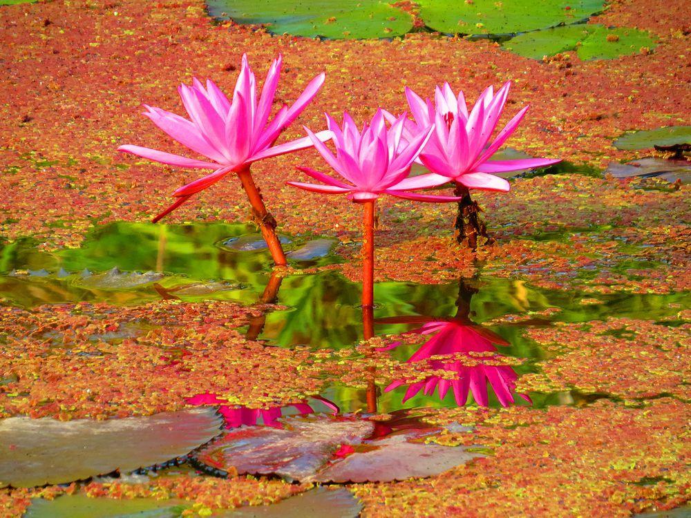 草花あふれる美しい場所で動物たち