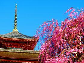 京都の名所「清水寺」で春を満喫!桜とお寺は日本の美