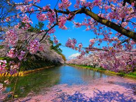 青森の桜はGW頃こそ見ごろ!壕まで桃色になる「弘前城」で岩木山も眺めよう
