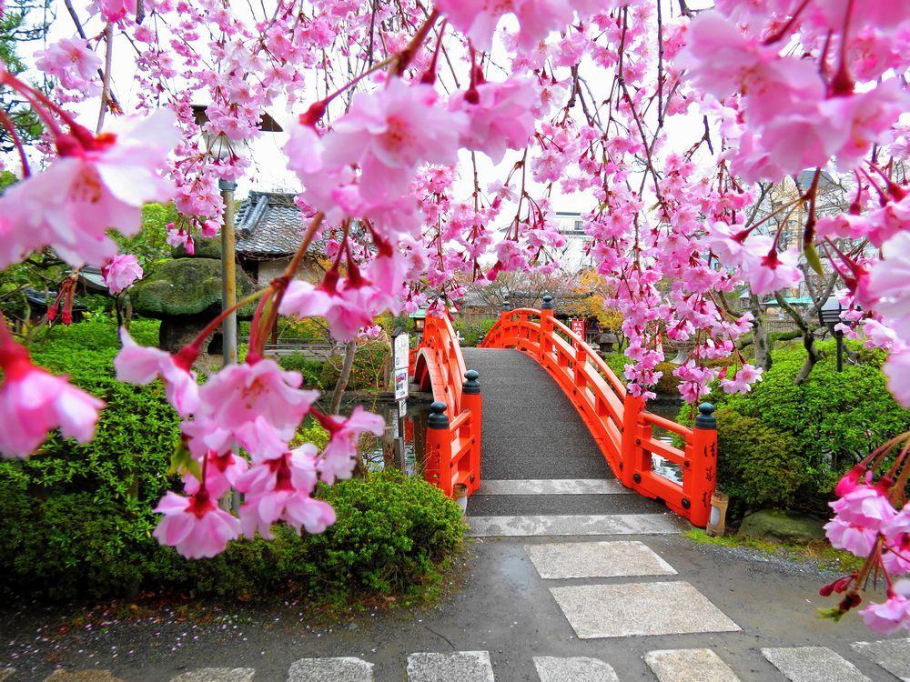 京都「神泉苑」は空海と源義経伝説が残る「桜」の穴場的名所