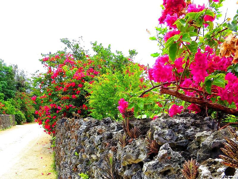 古き良さを最も残す沖縄・竹富島で星砂や水牛を楽しもう