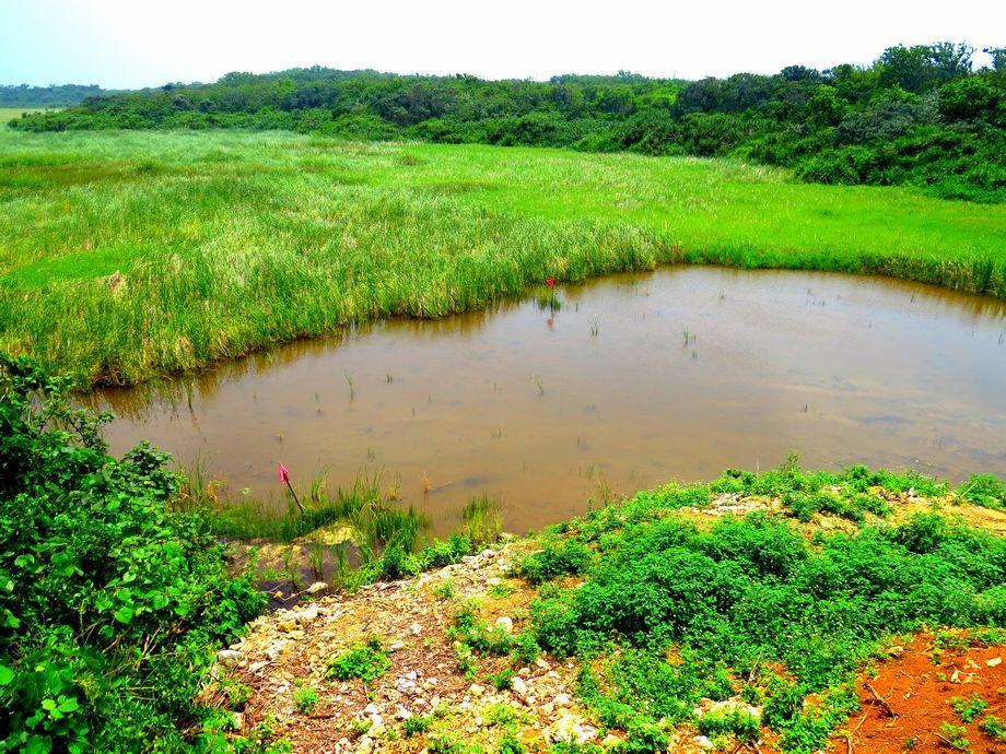 もともとは海だった池間湿原