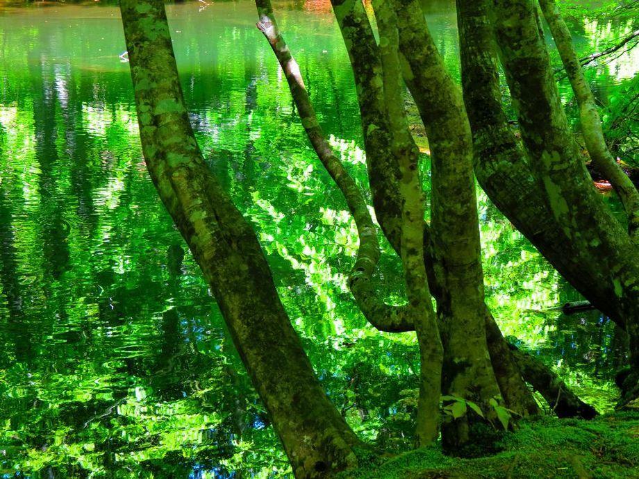 蔦沼まで散策