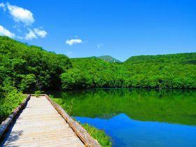 大自然の宝庫・青森「蔦沼」で、濃厚な青と緑を体験しよう!