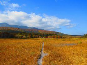青森八甲田観光は田代平湿原へ!紅葉の穴場は一面の黄金色
