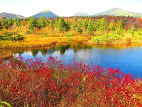 美しすぎる秋の八甲田!訪ねておきたい睡蓮沼と地獄沼