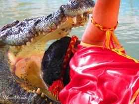 パタヤ「クロコダイルファーム」で迫力のワニショーと動物たち