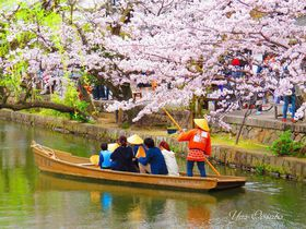 倉敷・美観地区で桜の船旅と、歴史ある観龍寺の美しさ