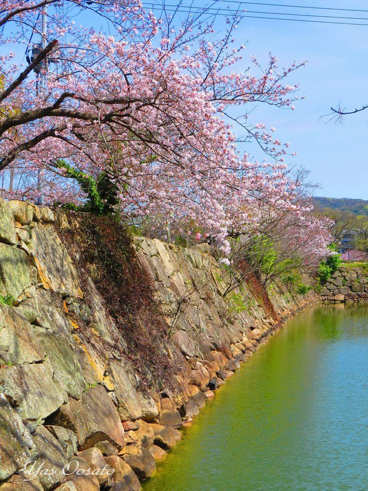 岡山城の濠