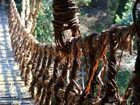 徳島の秘境・かずら橋をおっかなびっくり歩いてみよう