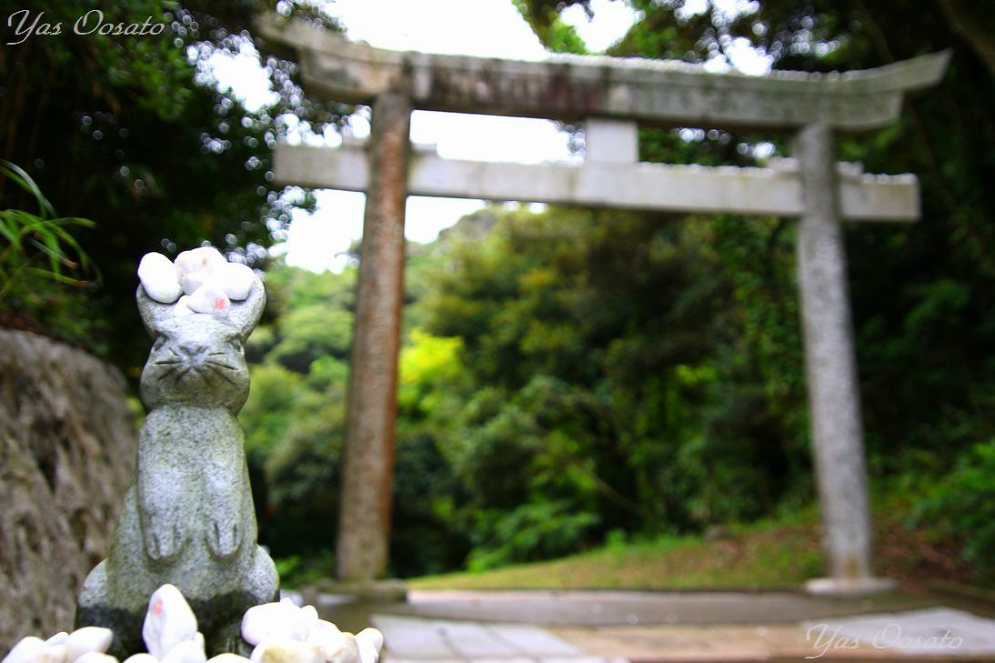 かわいい兎たちの参道と結び石の神秘