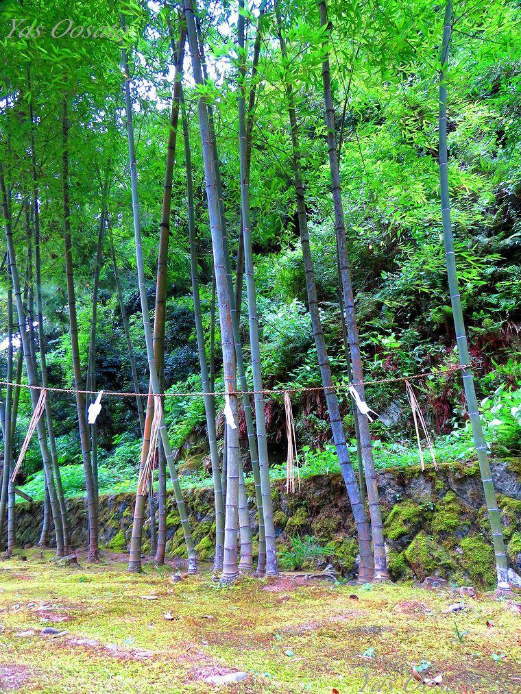 ご神竹と祓所