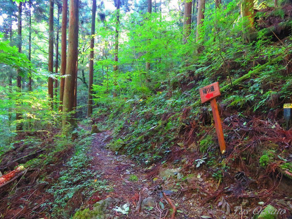 源流点への登山道