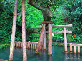 茨城のパワースポット・鹿島神宮の七不思議と剣聖・塚原卜伝の墓
