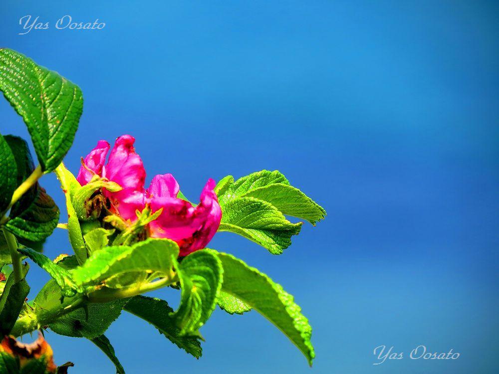 彩り鮮やかな花々