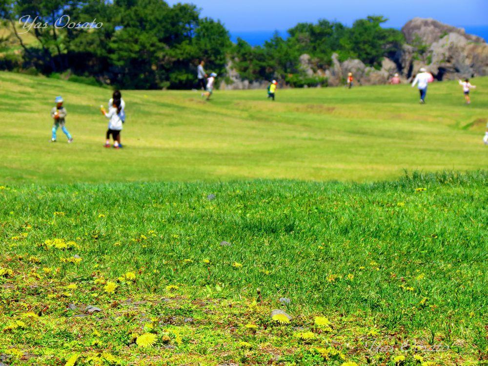 ウミネコも遊びに来る種差海岸で天然芝生を散策