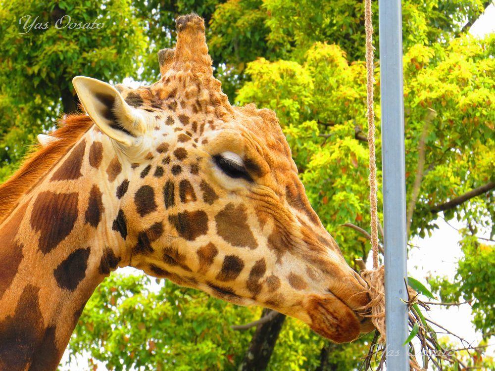 姫路市立動物園を散策