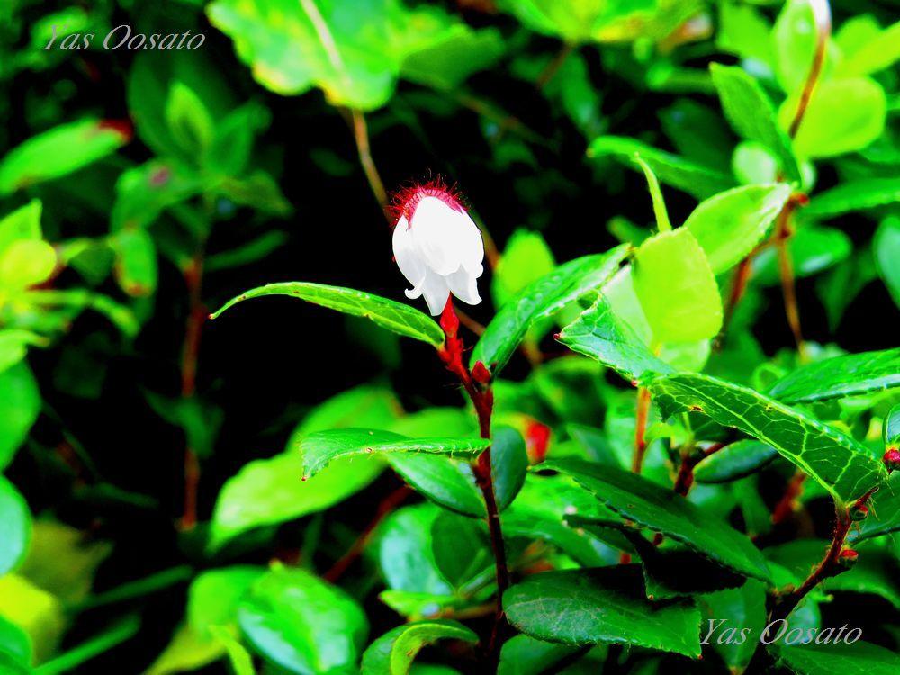 花の百名山の魅力