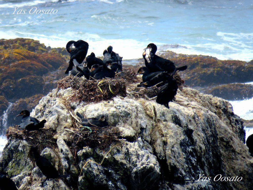 白い鳥と黒い鳥。そしてゼニガタアザラシ!