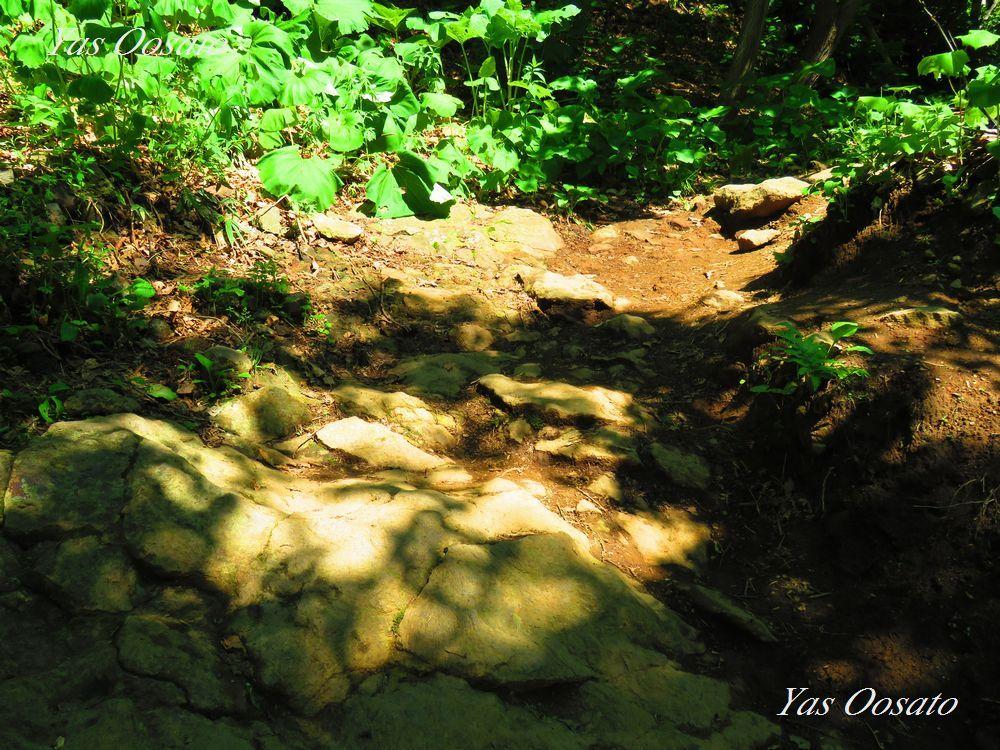 カムイワッカの湯の滝で沢登り