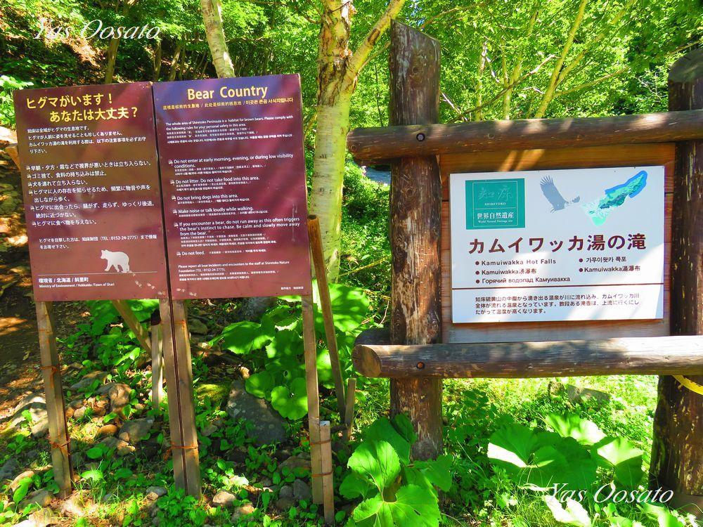 野生動物に注意しながらカムイワッカ湯の滝へ