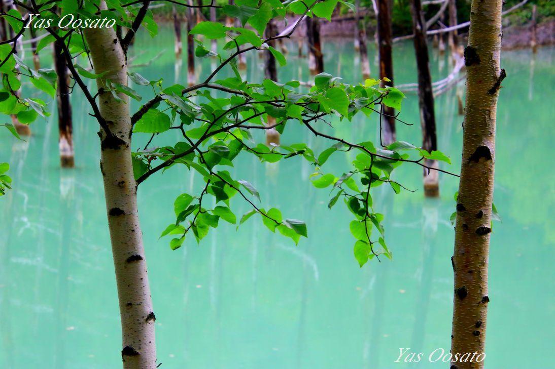 白金青い池の美しさ