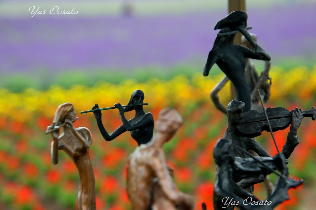 美しき花はラベンダーだけじゃない