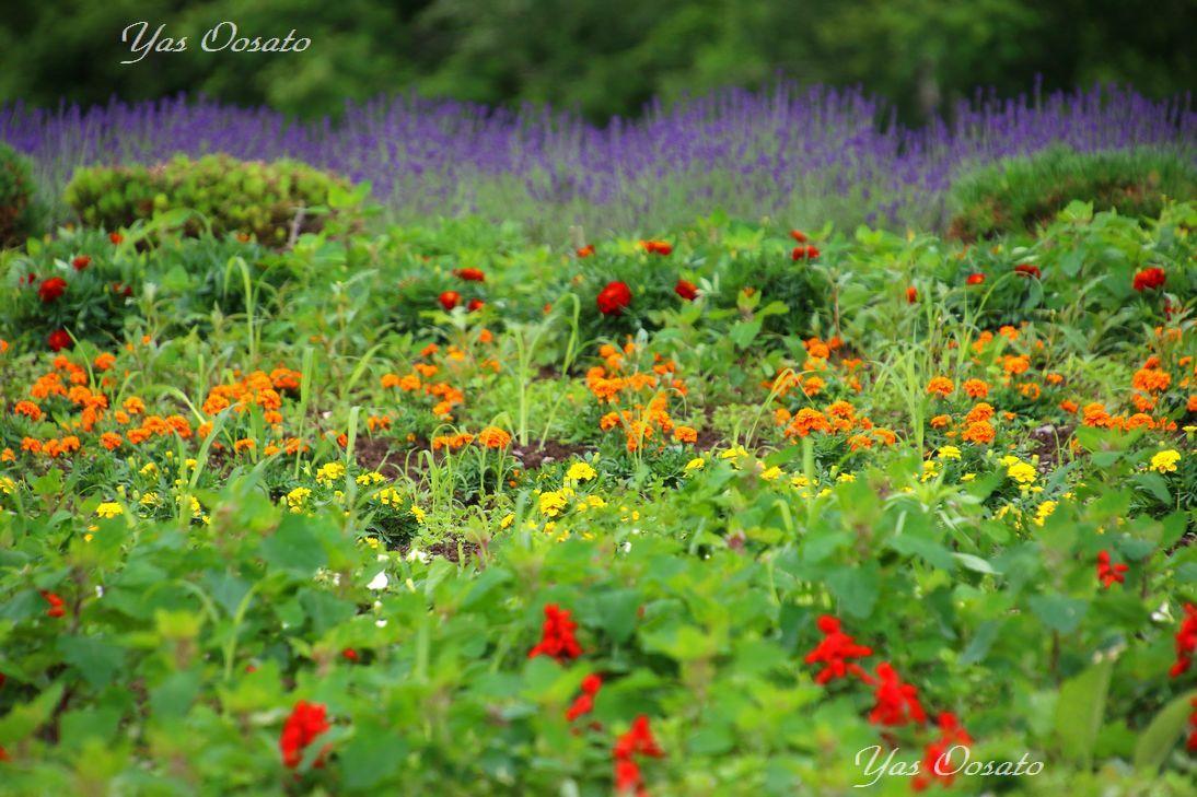 「ぜるぶの丘・亜斗夢の丘」に広がる花々