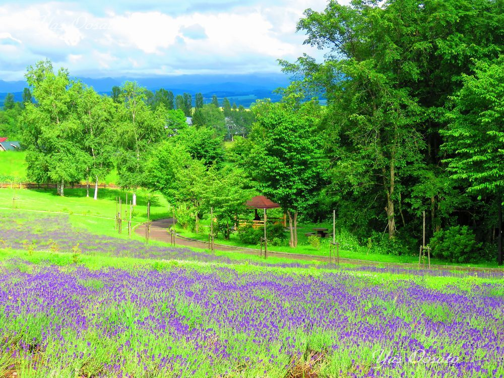 「北西の丘展望公園」からの絶景