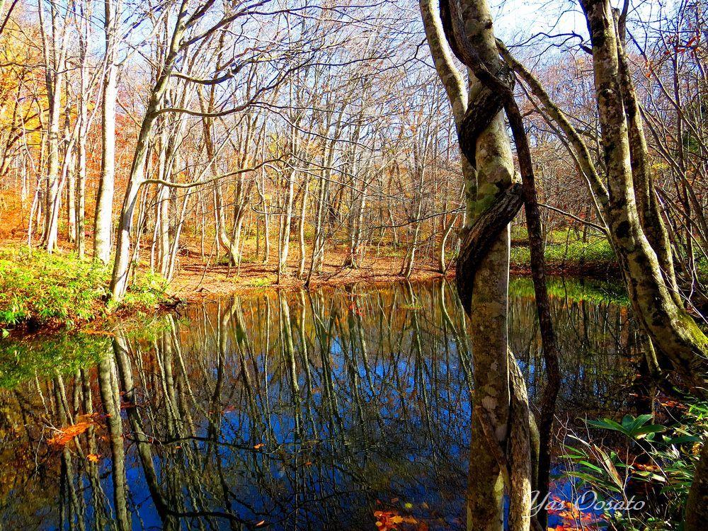 その色圧倒的!秋の青森十和田観光は蔦沼と蔦川の紅葉