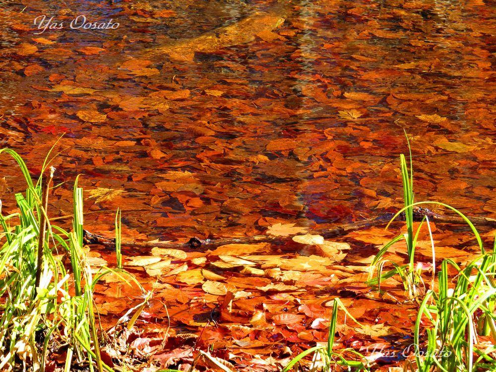 神秘的な「月沼」の紅葉