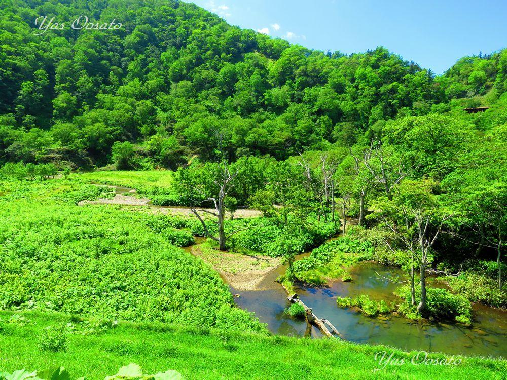熊越の滝まで歩く国道334号線が美しい
