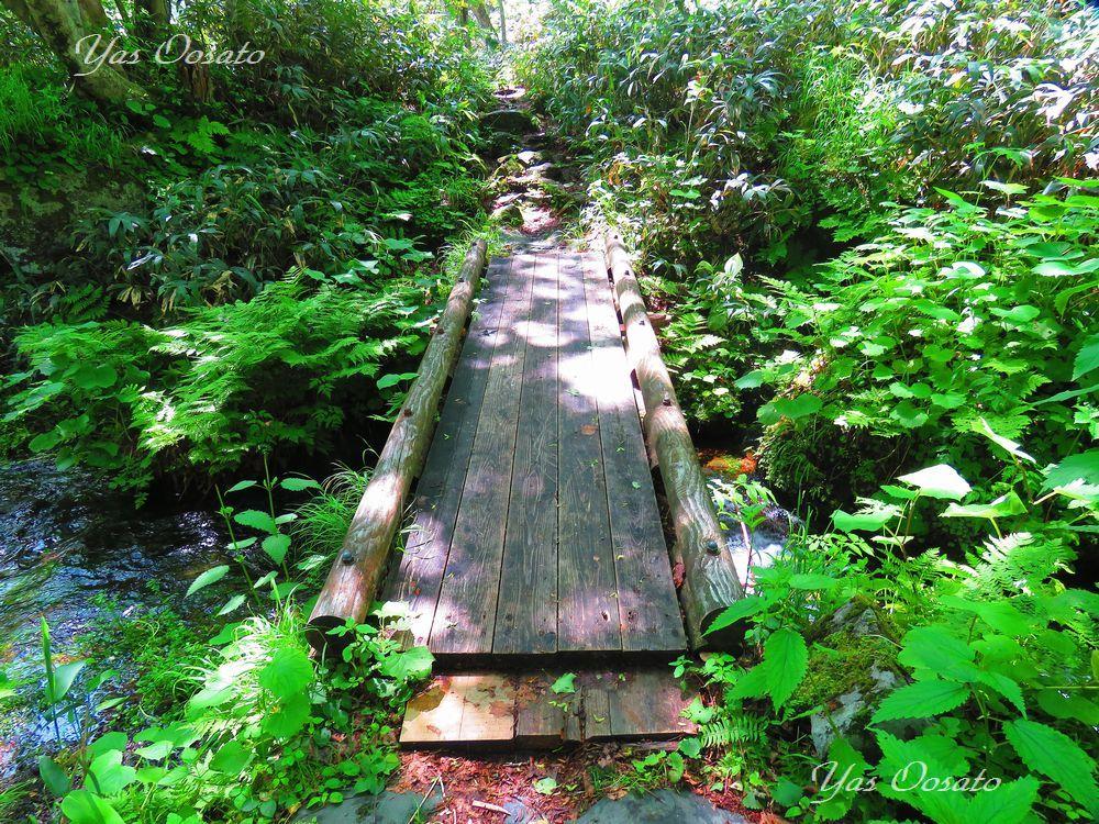 橋を歩き、羅臼の自然を満喫