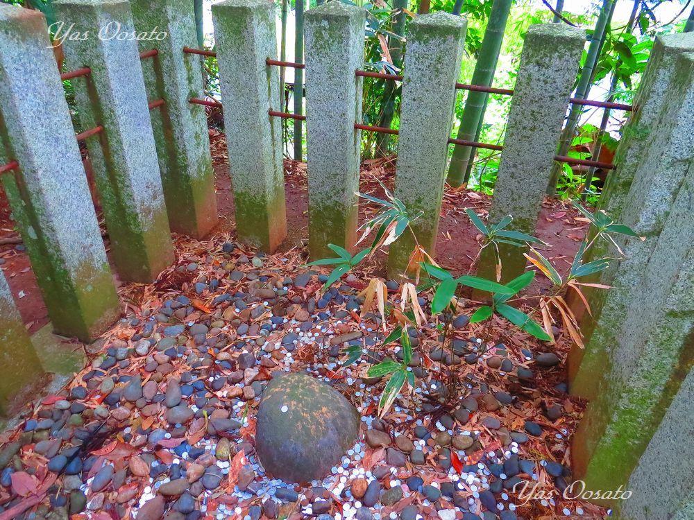 伝説の三本杉と要石!ここでもご利益を頂こう